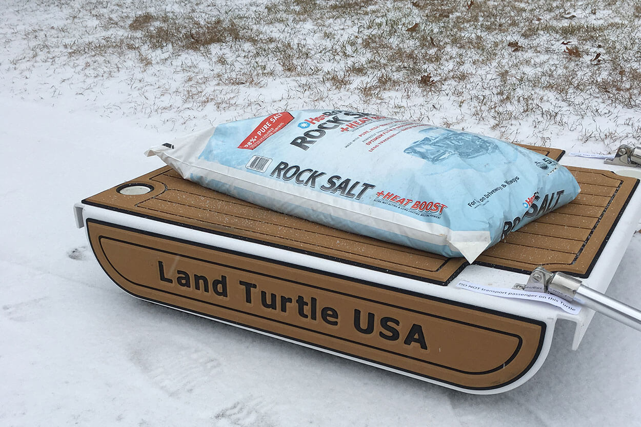 Land Turtle On THe Snow