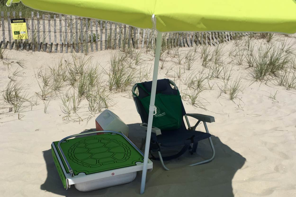 Land Turtle On the Beach With An Umbrella